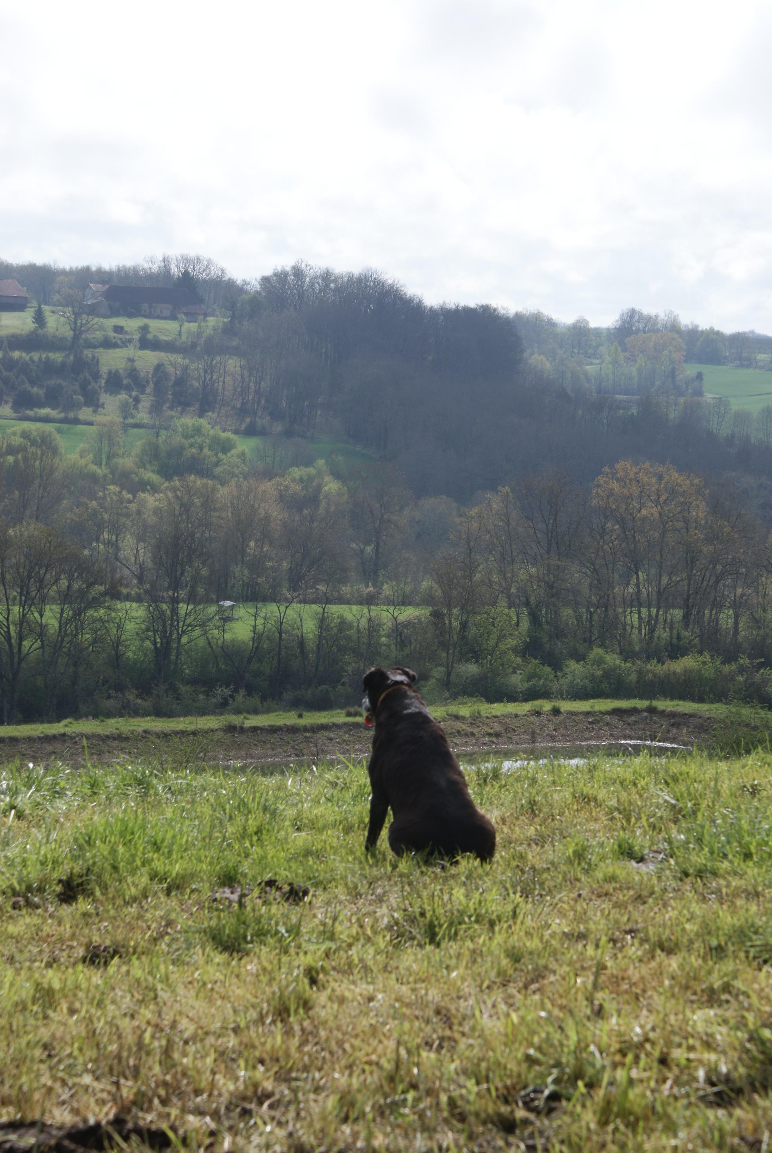 fil électrique clôture pour chien